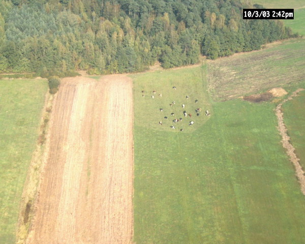 Suszec__jako_rolniczy_teren.jpg (97.49 Kb)